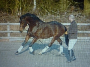 Backing and schooling