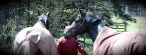 Horse Listening